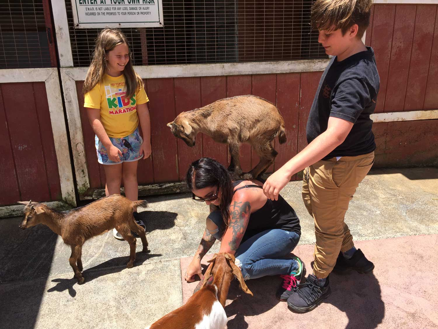 Visitors and Goats at the The Boo Boo Zoo